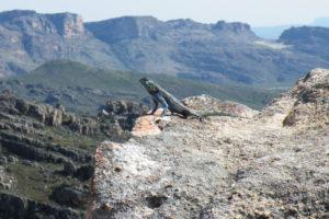 lizard inrock-will