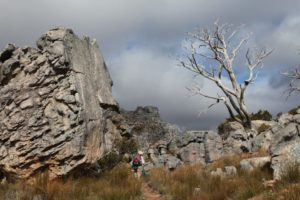 hiker tree- sky5-galeo