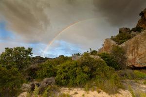 rainbow-Fiona Ayerst